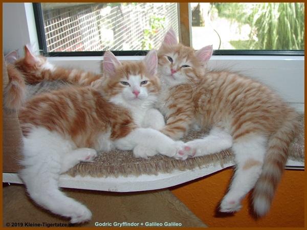 allergenarme katzen
